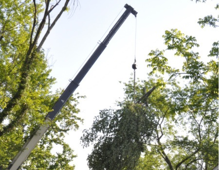 Maryland Tree Removal