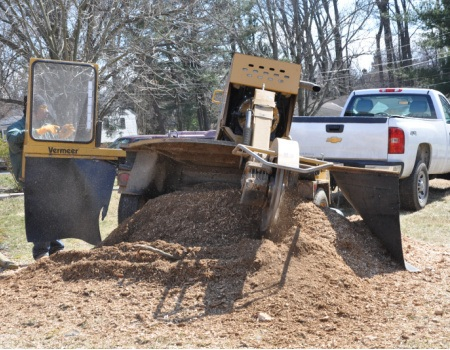Laurel Stump Removal