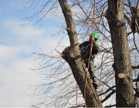 Tree Removal Bethesda