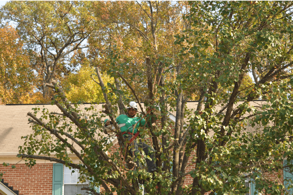 Tree Care in Bethesda Maryland