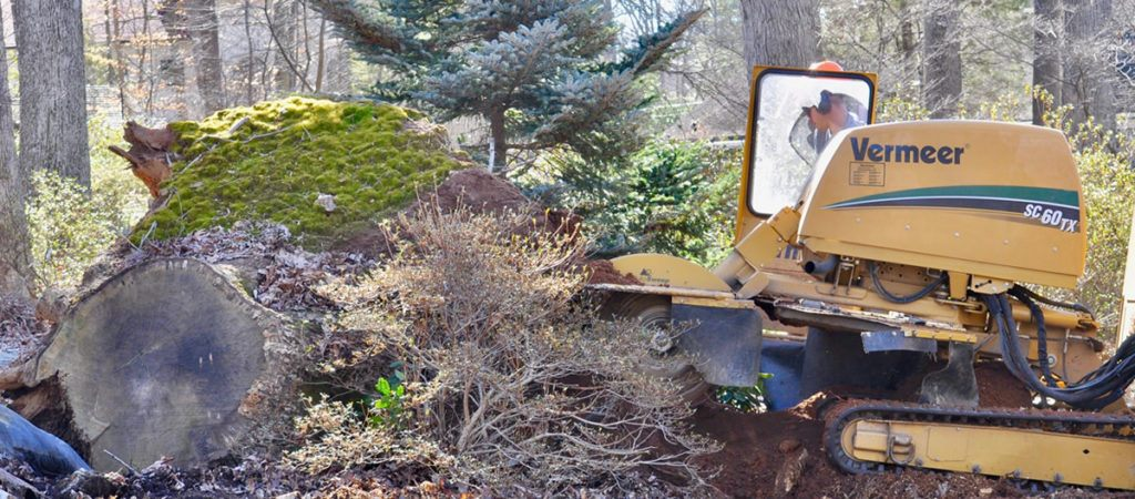 Stump removal in Bethesda Maryland