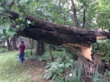 emergency fallen tree Maryland